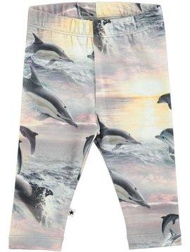 molo Stefanie - Dolphin Sunset