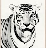 TYLINEK TIGER