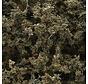 F1134 Fine Leaf Foliage  Dead/75ci
