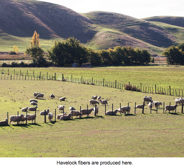 Havelock's herd in New Zealand