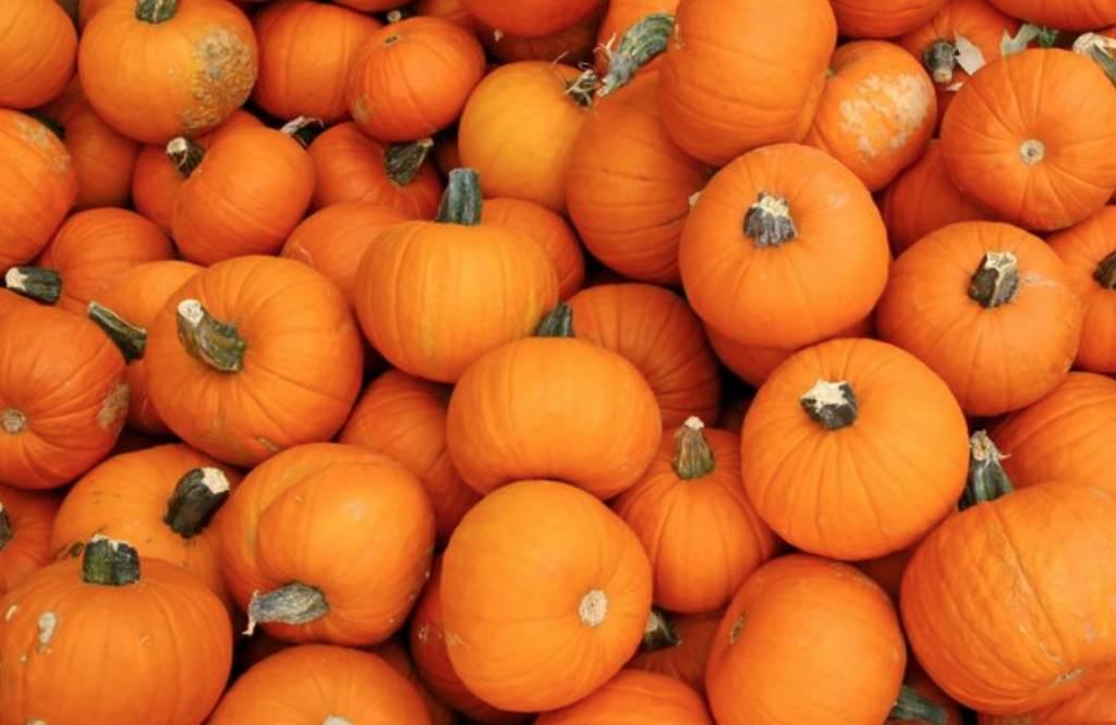 October 27th Newsletter