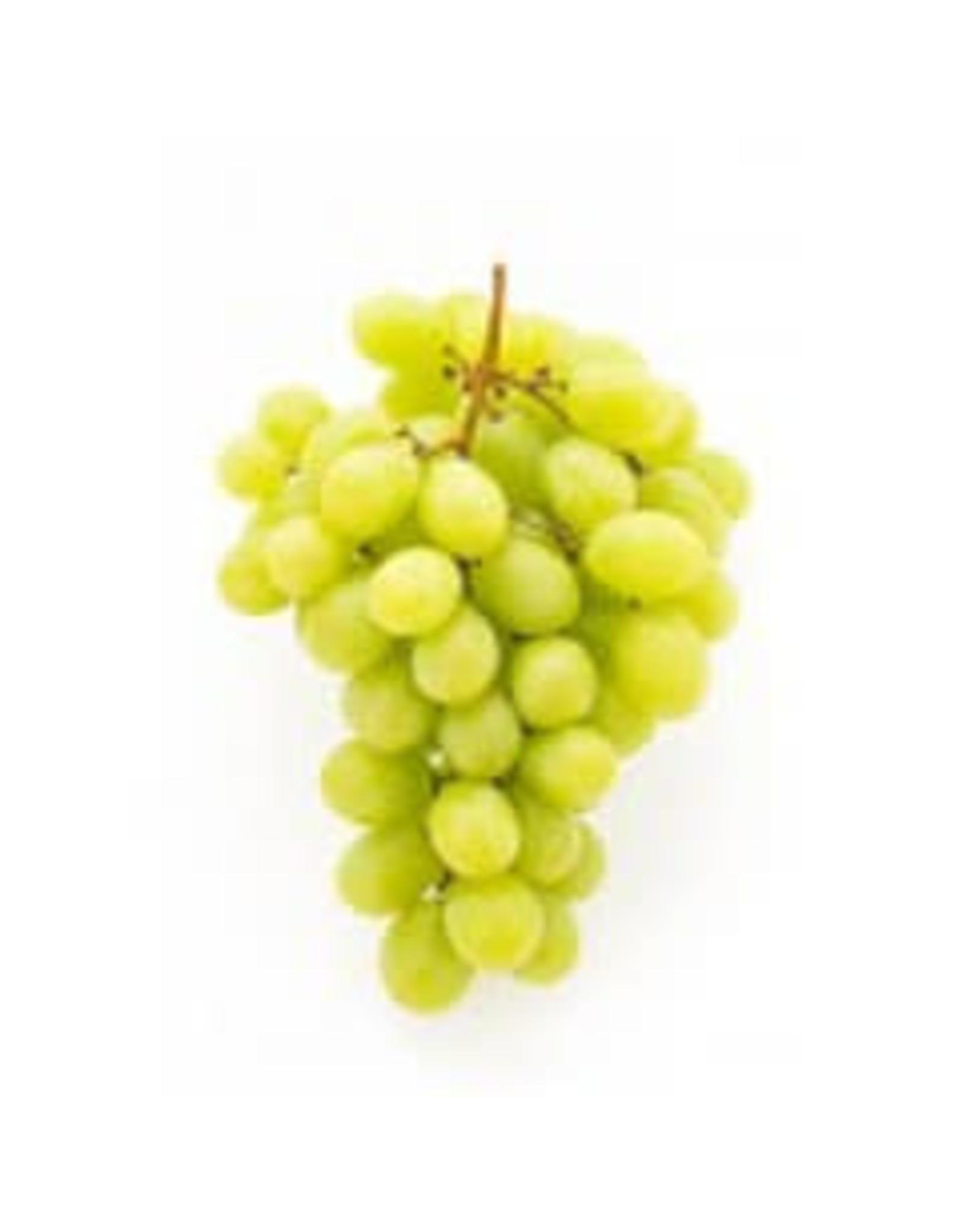 Italian Pinot Bianco 6 Gal. Juice (White)