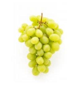 Italian Pinot Grigio 6 Gal. Juice (White)