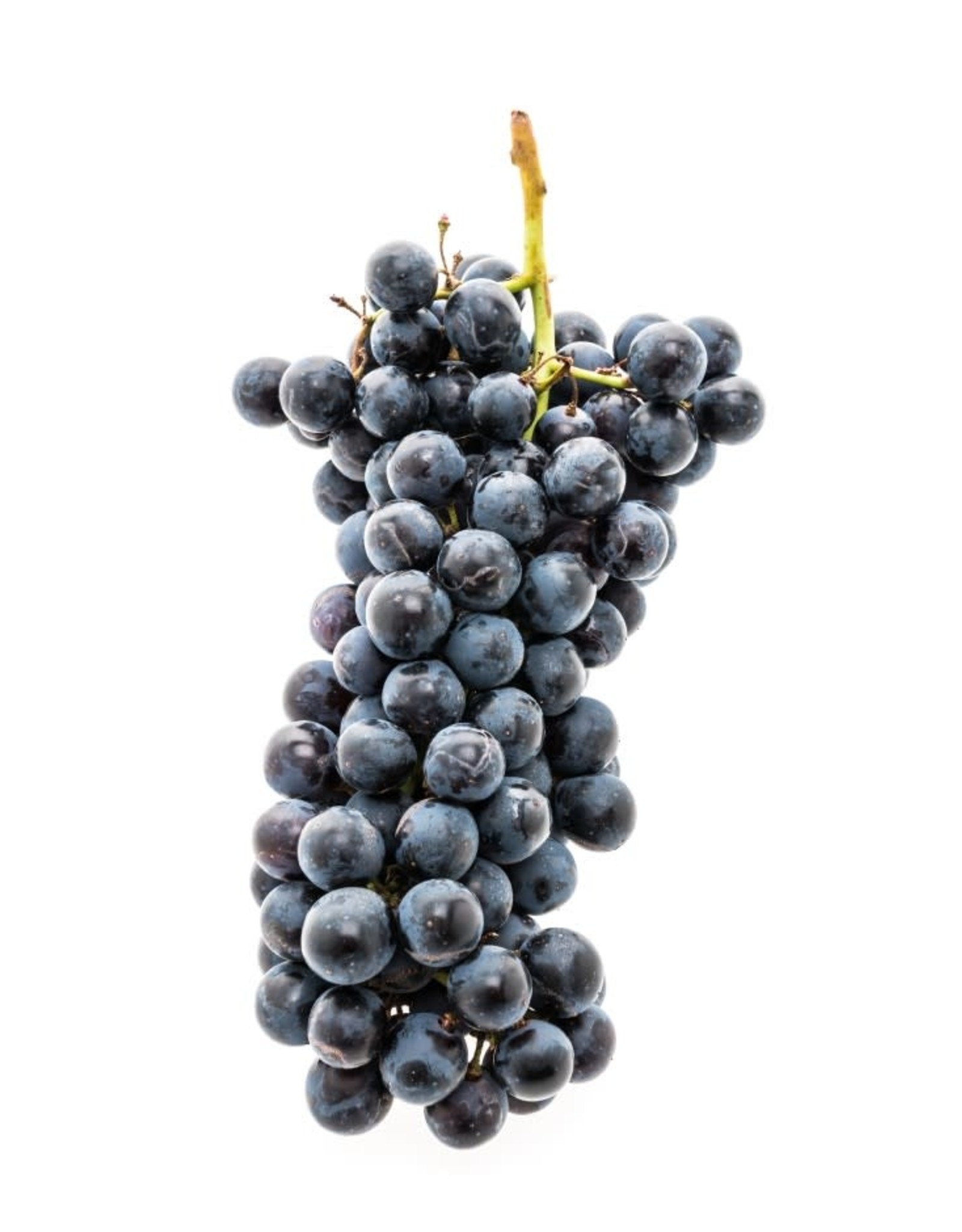 Regina California Pinot Noir 6 Gal. Juice (Red)