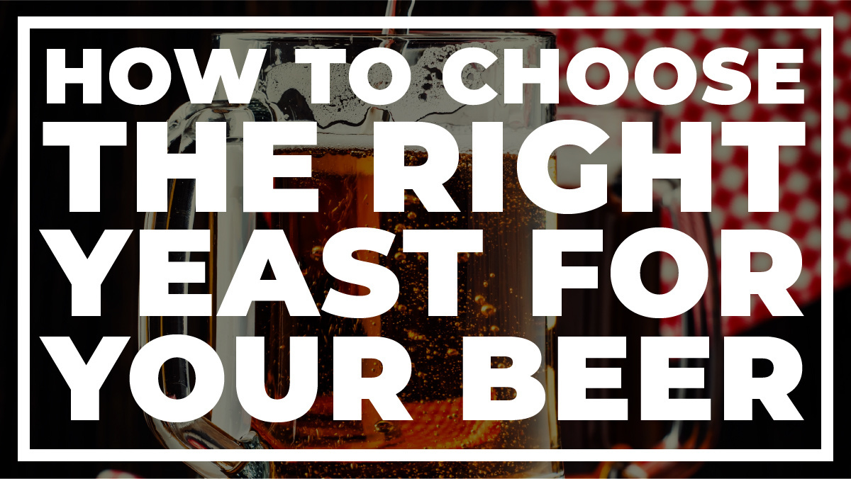 How to Choose the Right Yeast for Your Beer