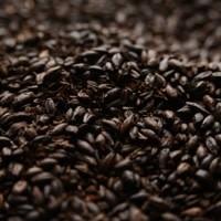 BRIESS 2-ROW BLACK MALT 50 LB BAG