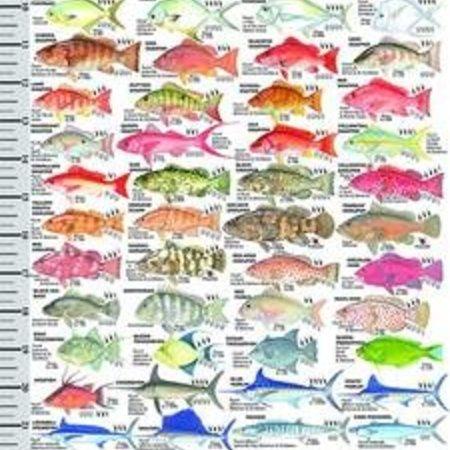 Florida Fish Guide and Ruler