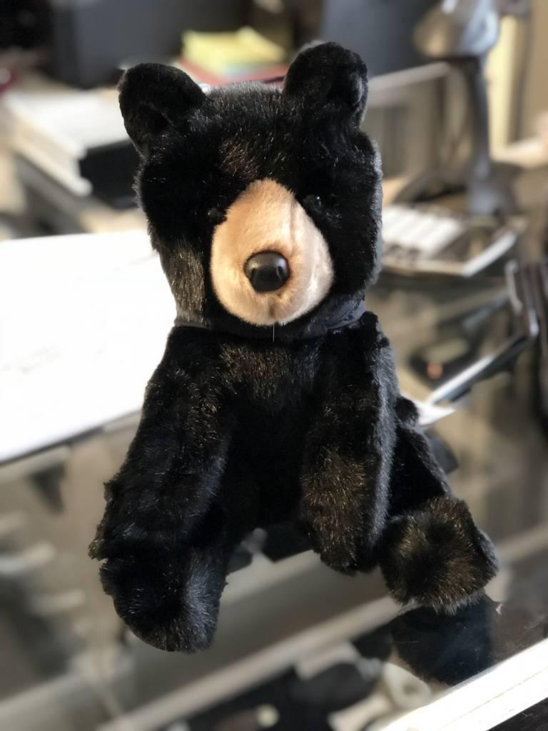 Arlo The Black Bear