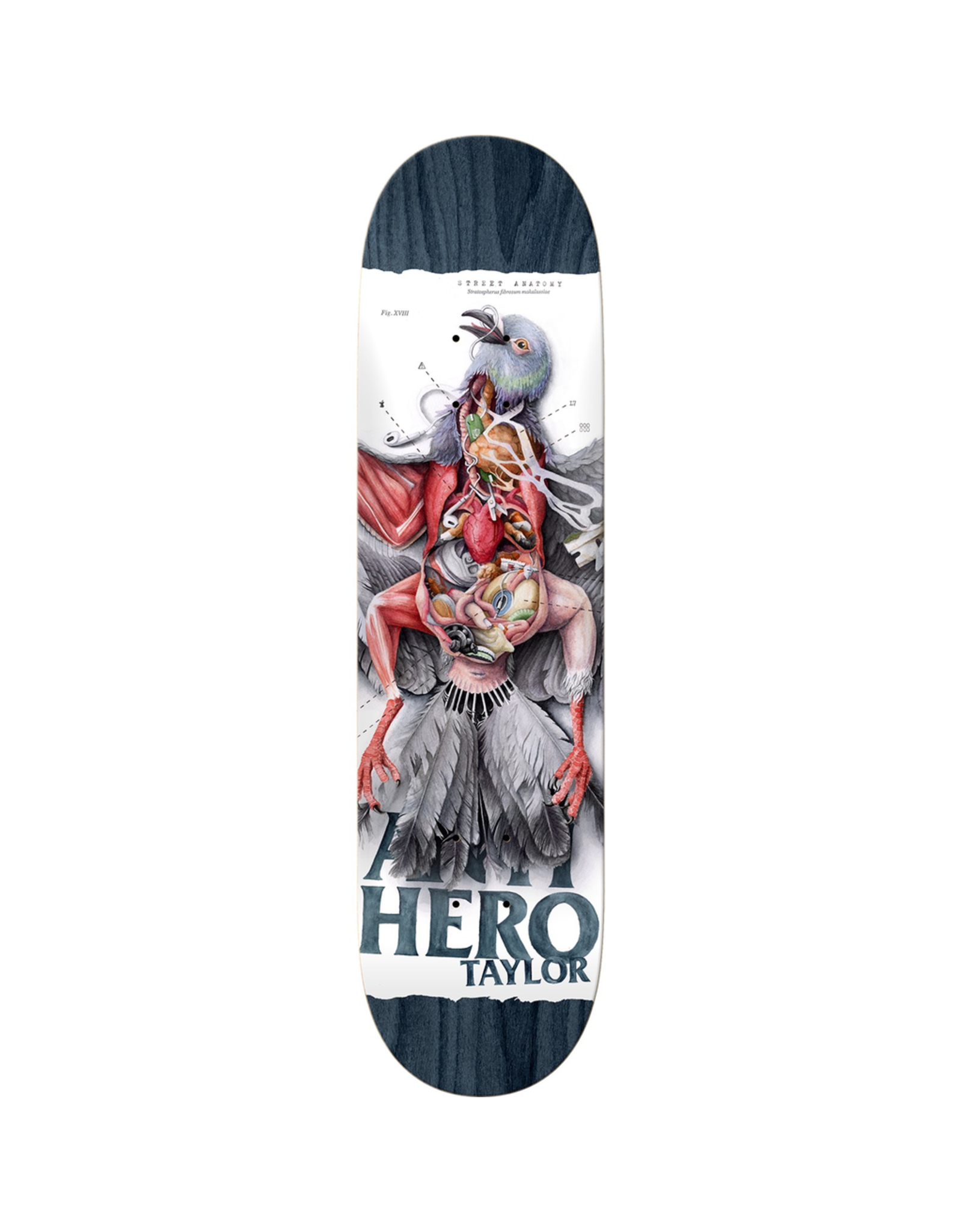 "ANTI HERO Anti Hero Skateboards Grant Taylor Street Anatomy 8.5"" Deck"