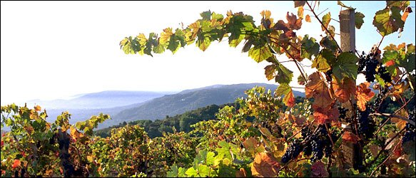 Winery of the Month: Mount Eden
