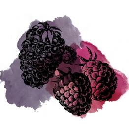 Edmund's Oast 'Sour Blackberry Raspberry' 16oz Can