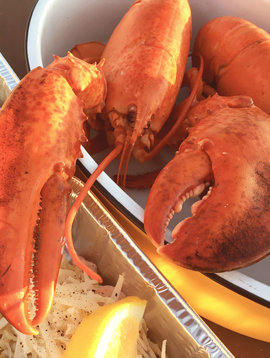 Gaspésie cooked lobster (1 pound to 1-1/4  pounds)