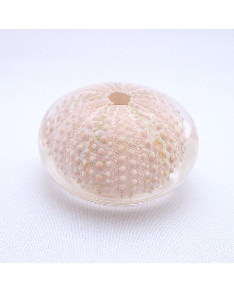 Sola Cube Echinometra Acrylic Sea Urchin