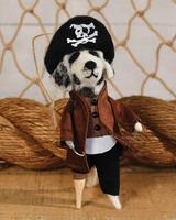 HomArt Dog Pirate Captain