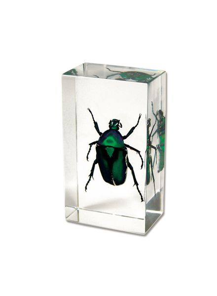 The Real Insect Co Green Rose Chafer Beetle Paperweight