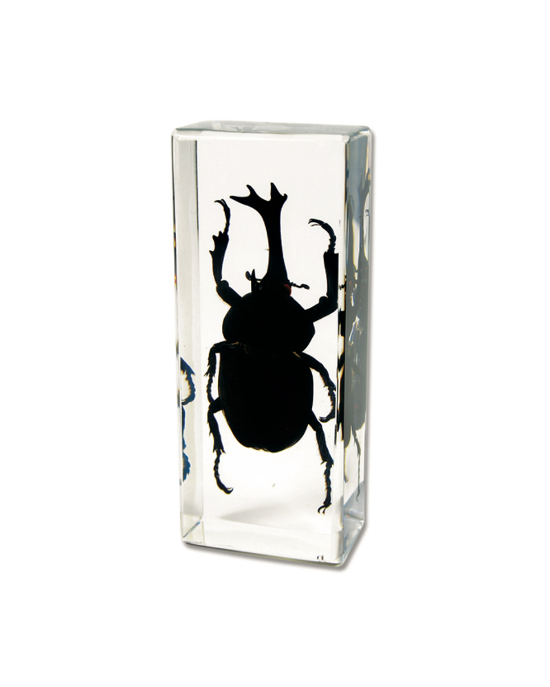 The Real Insect Co Rhinoceros Beetle Paperweight