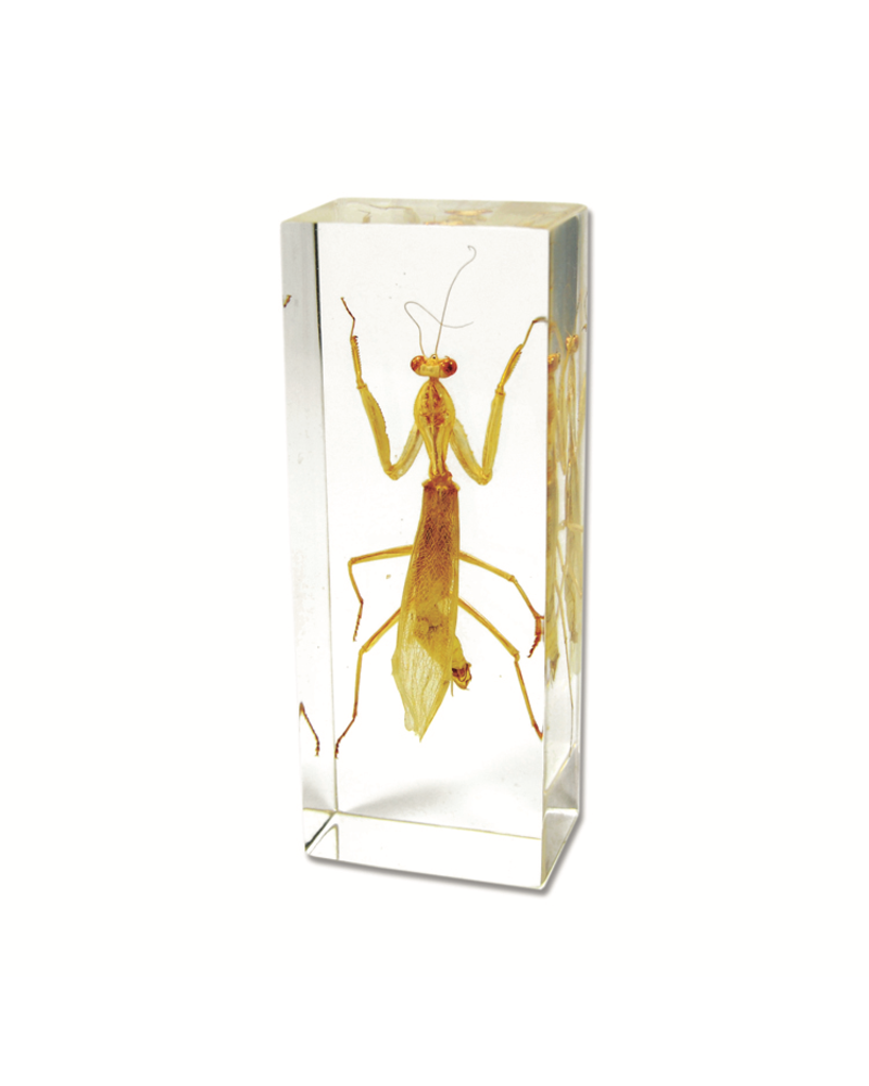 The Real Insect Co Mantis Paperweight