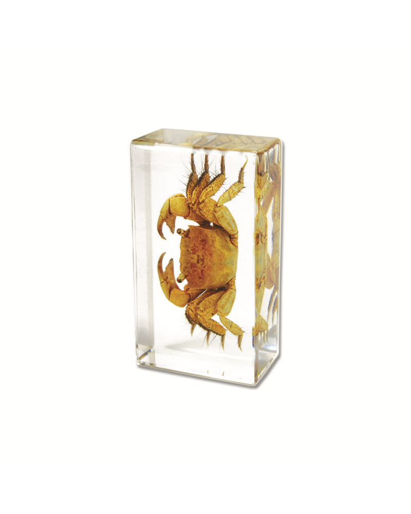 The Real Insect Co Crab Paperweight