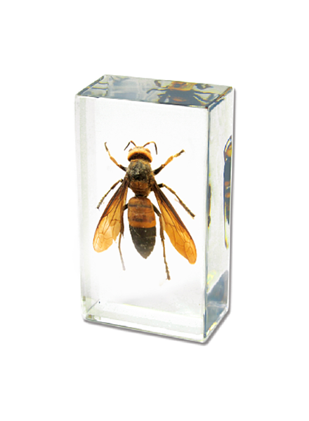The Real Insect Co Wasp Paperweight