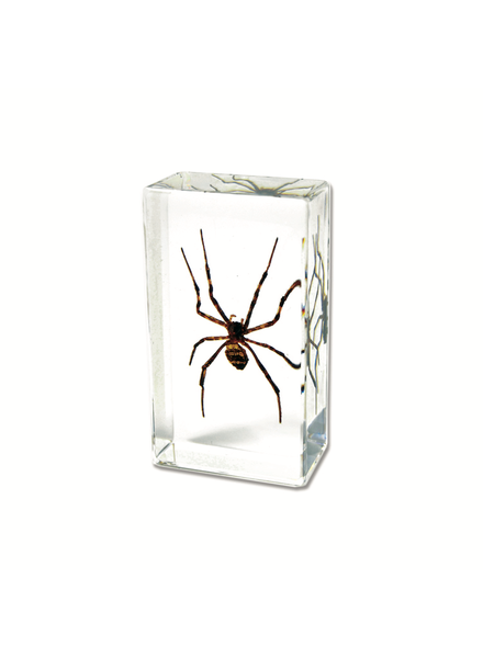 The Real Insect Co Wolf Spider Paperweight