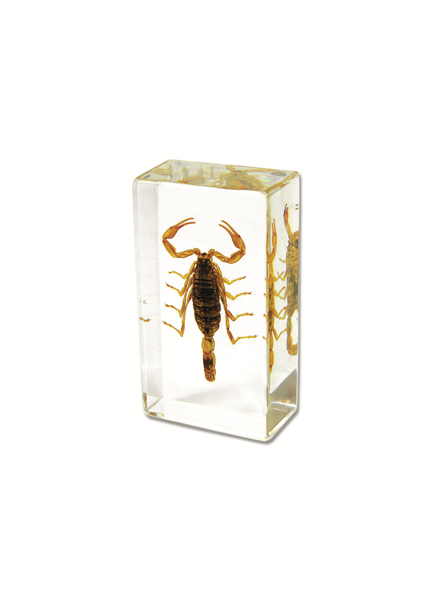 The Real Insect Co Scorpion Paperweight