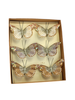 HomArt Mandarin Glitter Butterflies on Clip - Box of 6 Assorted - White, Grey, Taupe