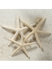 HomArt Seashell - Finger Starfish - Set of 6