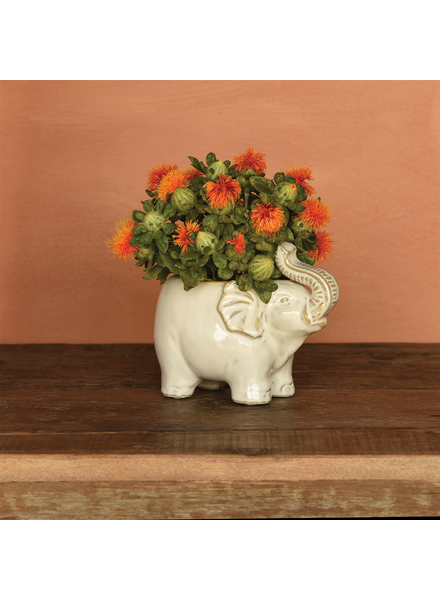 HomArt Elephant Cachepot, Ceramic - Fancy White