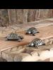 HomArt Cast Metal Turtle - Antique Brass