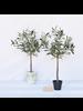 HomArt Olive Tree, Faux