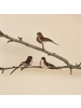 HomArt Birds on Clips, Feather - Box of 3 - Red Neck Feathers