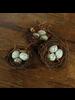 HomArt Bluebirds Nest - Set of 2