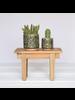 HomArt Cactus Motif Cachepot, Ceramic - Sm - Green