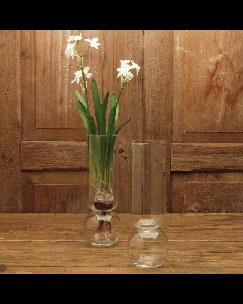 Flora Source Ltd Paperwhite Bulb - Set of 8 (online only)