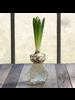 HomArt Bulb Vase Recycled Clear