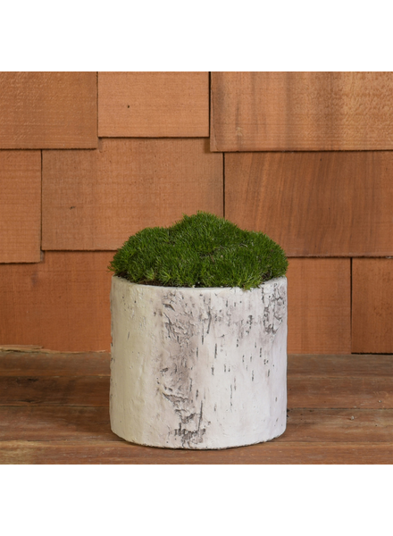 HomArt Faux Birch Cylinder, Cement - Med - White