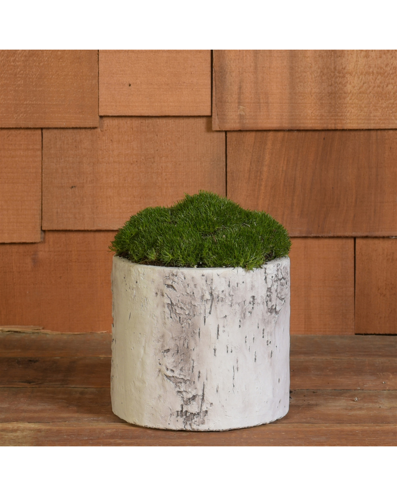 HomArt Faux Birch Cylinder, Cement - Med - White