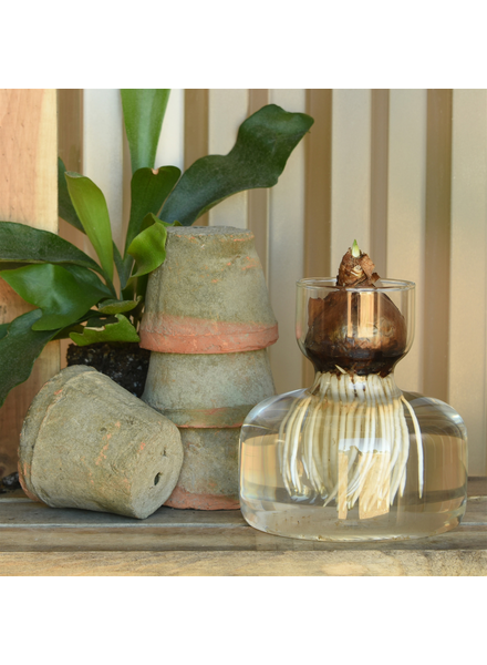 HomArt Bulb Vase, Wide Bottom, Glass