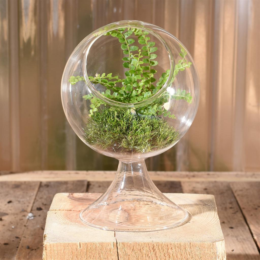 Homart Sole Terrarium Glass Round Sm Areohome