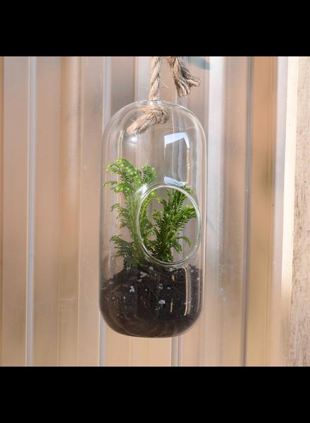 HomArt Sole Hanging Terrarium, Glass - Lrg