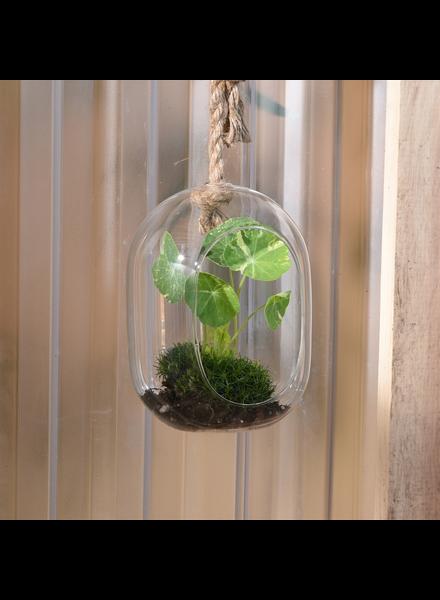 HomArt Sole Hanging Terrarium, Glass - Wide