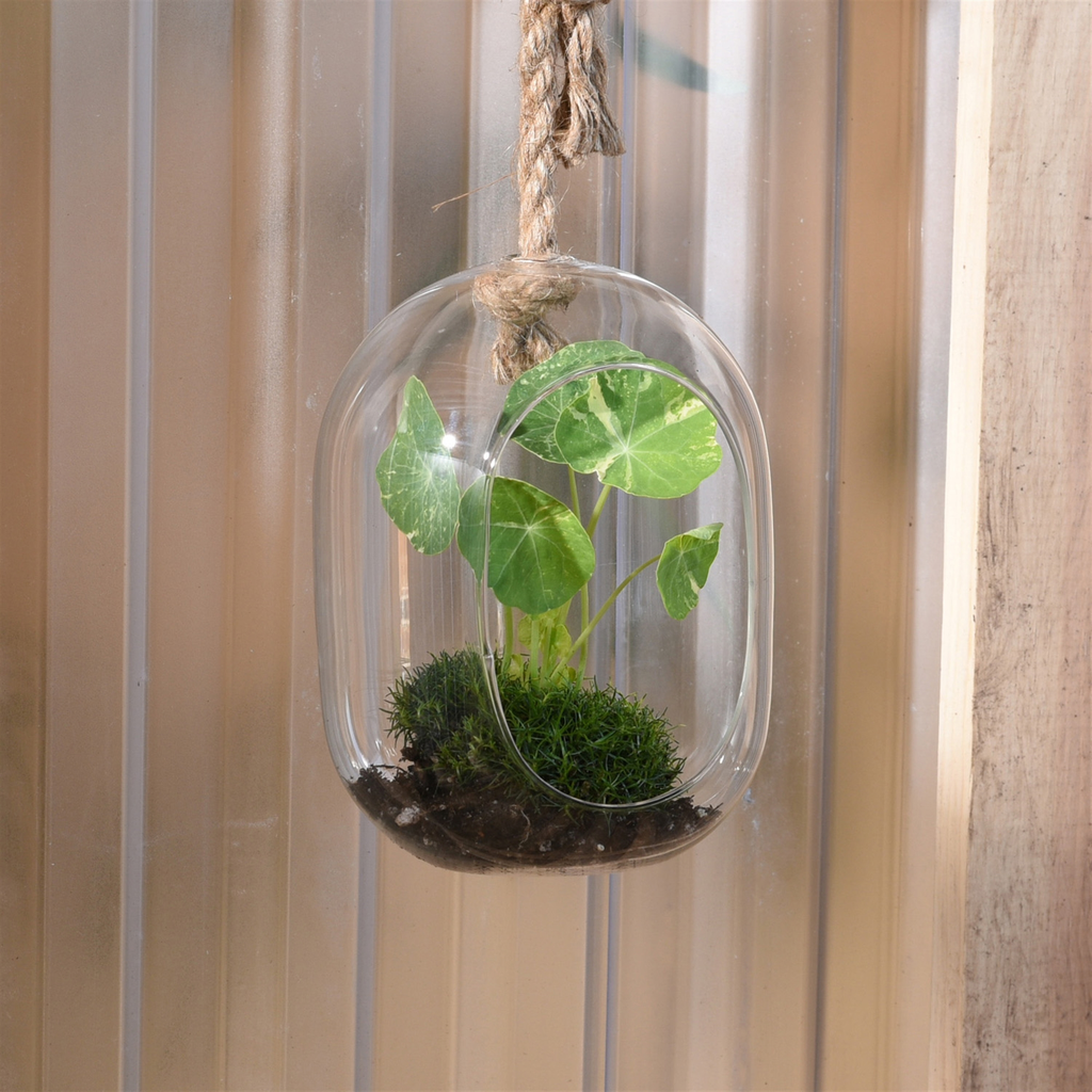 Homart Sole Hanging Terrarium Glass Wide Areohome