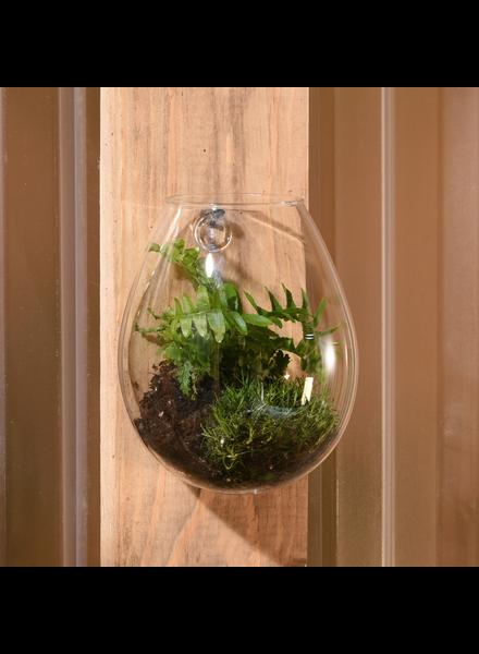 HomArt Sole Wall Terrarium, Glass - Sm
