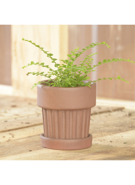 HomArt Ribbed Brown Clay Pot & Saucer - Sm - Set of 2