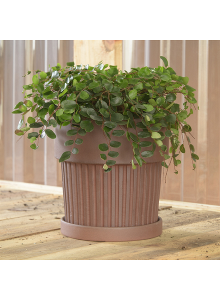 HomArt Ribbed Brown Clay Pot & Saucer - Lrg