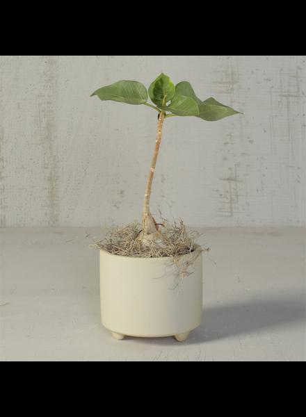 HomArt Simon Footed Planter, Ceramic, White - Sm - Matte White