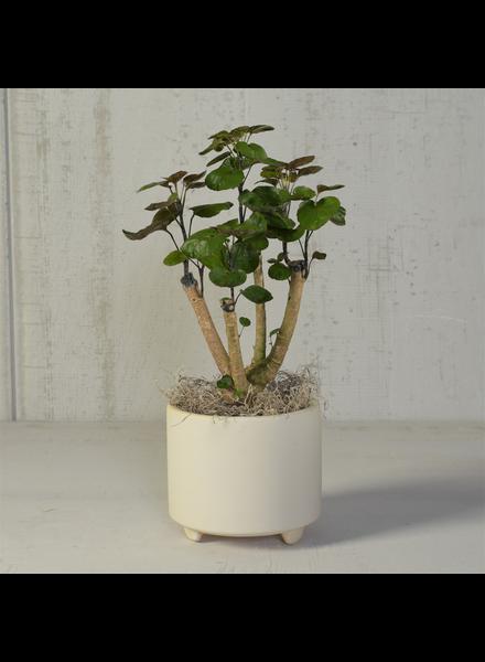 HomArt Simon Footed Planter, Ceramic, White - Lrg - Matte White