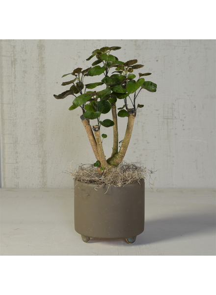HomArt Simon Footed Planter, Ceramic, Grey - Lrg - Matte Grey