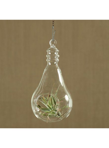 HomArt Hanging Glass Light Bulb - Lrg Clear