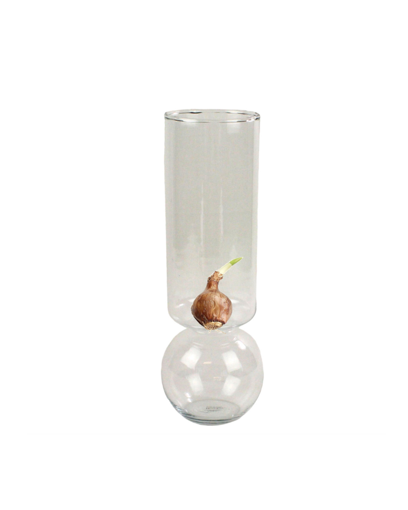 HomArt Bulb Vase Tall Clear with Single Paperwhite Bulb